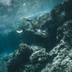 underwater view in the bvi