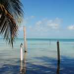 view of the palm trees and ocean on a Belize yacht charter
