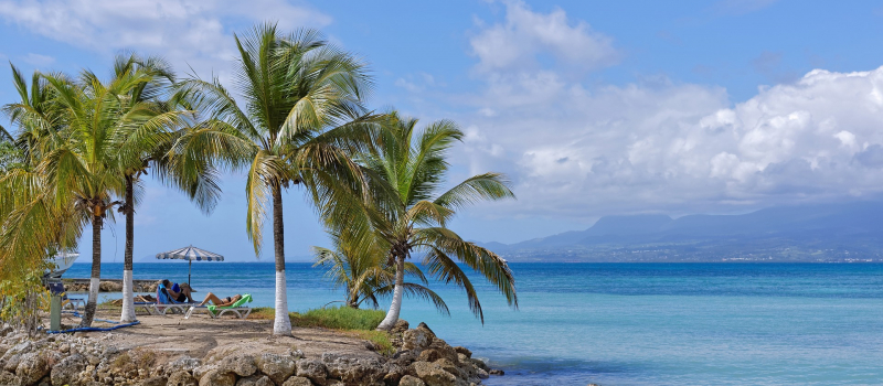 palm trees and ocean on a guadeloupe sailing itinerary